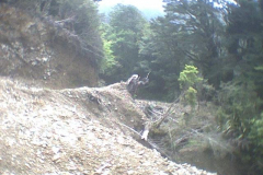 TR09511